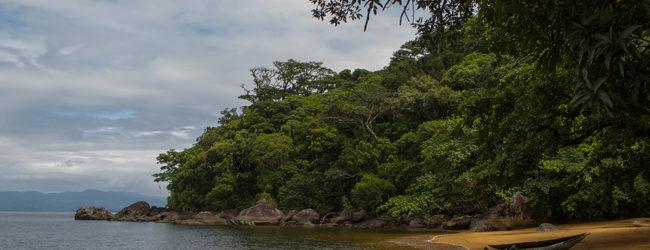 Habitat Calumma radamanus Nosy Mangabe