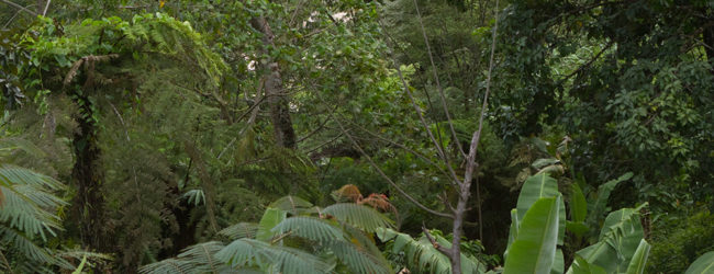 Habitat Calumma tjiasmantoi in Ranomafana, 2018