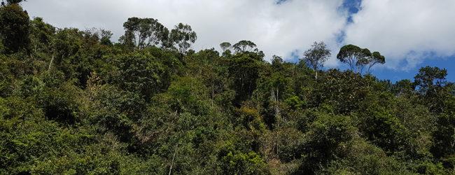 Habitat von Calumma emelinae nahe Moramanga, 2018