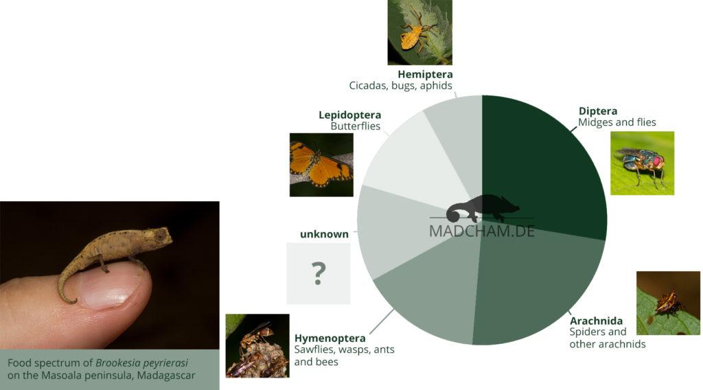 Food spectrum of Brookesia peyrierasi in Masoala