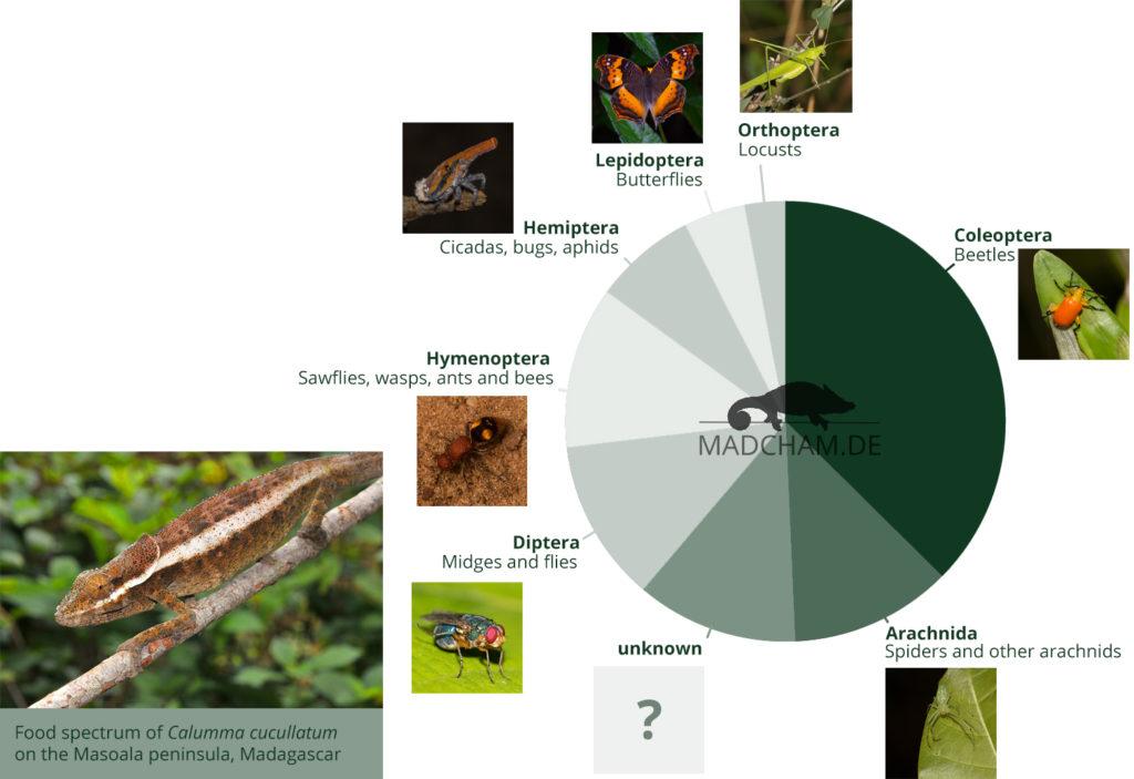 Food spectrum of Calumma cucullatum in Masoala