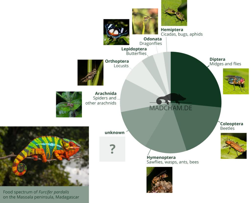 Food spectrum of Furcifer pardalis in Masoala